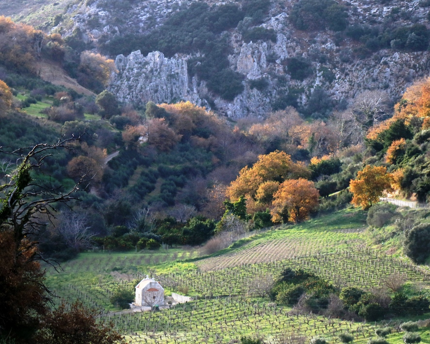 Cretan Vineyards In Winter