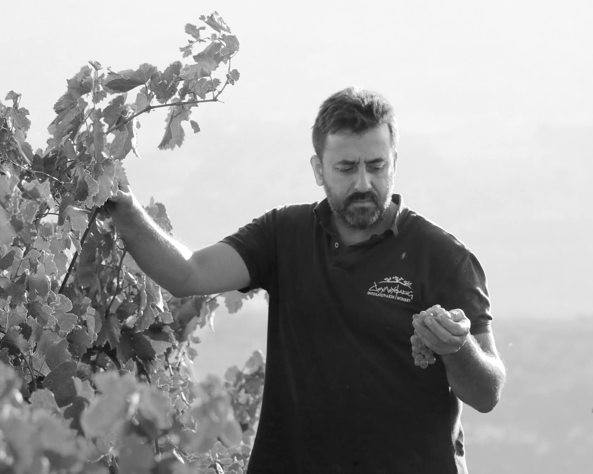 Douloufakis Nikos Winemaker from Crete, Greece